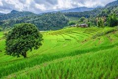 Reisfelder auf terassenförmig angelegtem in der rainny Jahreszeit bei Chiang Mai, Thailan Lizenzfreie Stockbilder