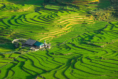Reisfelder auf terassenförmig angelegtem in der rainny Jahreszeit an SAPA, Lao Cai, Vietnam Stockfotos