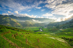 Reisfelder auf terassenförmig angelegtem in der rainny Jahreszeit an SAPA, Lao Cai, Vietnam Stockfotografie