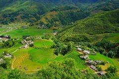 Reisfelder auf terassenförmig angelegtem in der rainny Jahreszeit an SAPA, Lao Cai, Vietnam Lizenzfreie Stockfotografie