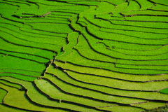 Reisfelder auf terassenförmig angelegtem in der rainny Jahreszeit an SAPA, Lao Cai, Vietnam lizenzfreies stockfoto