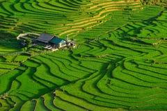 Reisfelder auf terassenförmig angelegtem in der rainny Jahreszeit an SAPA, Lao Cai, Vietnam Lizenzfreie Stockbilder