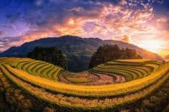 Reisfelder auf terassenförmig angelegtem mit Kiefer bei Sonnenuntergang in MU Cang Chai Stockbilder