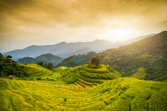Reisfelder auf terassenförmig angelegtem von Hoang Su Phi, Vietnam Stockbilder