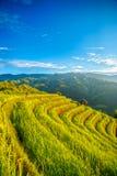 Reisfelder auf terassenförmig angelegtem von MU Cang Chai lizenzfreie stockfotos