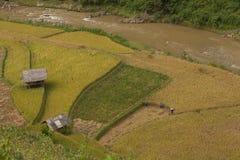 Reisfelder auf terassenförmig angelegtem von MU Cang Chai, YenBai, Vietnam Stockbilder