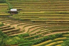 Reisfelder auf terassenförmig angelegtem von MU Cang Chai, YenBai, Vietnam Lizenzfreie Stockfotos