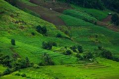 Reisfelder auf terassenförmig angelegtem von MU Cang Chai, YenBai, Vietnam Reis f Lizenzfreie Stockbilder