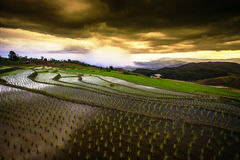 Reisfelder auf terassenförmig angelegtem von MU Cang Chai, YenBai, Vietnam Reis f Stockfoto