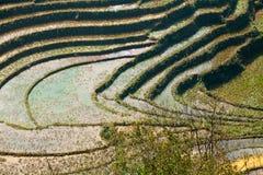 Reisfelder auf terassenförmig angelegten Bergen Stockfotografie