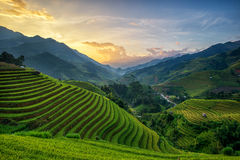 Reisfelder auf Terrasse Stockfoto