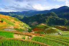 Reisfelder auf Terrasse in der Regenzeit in MU Cang Chai, Yen Bai, Vietnam Lizenzfreie Stockfotografie