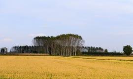 Reisfelder (Bereguardo, Nord-Italien) Stockbild