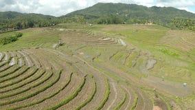 Reisfelder in den Philippinen Vogelperspektiven lizenzfreie stockfotos