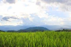 Reisfelder in der Landschaft von Thailand Stockfotografie