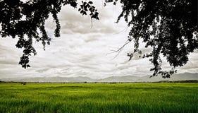 Reisfelder des Grüns mit Niederlassung und Berg Lizenzfreie Stockfotos