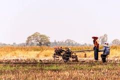 Reisfelder, die geerntet worden sind und f?r das folgende Reispflanzen sich vorbereiten lizenzfreies stockfoto