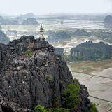 Reisfelder am frühen Morgen bei Tam Coc, Ninh Binh, Vietnam Lizenzfreie Stockbilder
