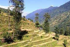 Reisfelder im Annapurna Tal Lizenzfreies Stockbild