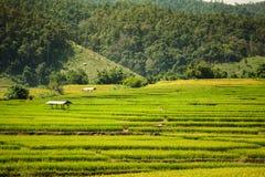 Reisfelder im ländlichen Tal Lizenzfreies Stockfoto