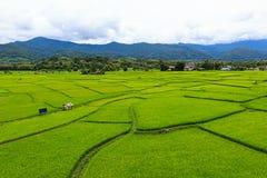 Reisfelder mit Berg auf terassenförmig angelegtem Lizenzfreie Stockfotos