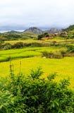Reisfelder mit Felsformation und Dorf im Hintergrund an Stockbilder