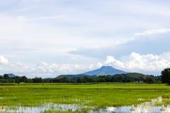 Reisfelder mit Gebirgshintergrund Lizenzfreie Stockfotos