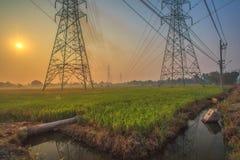 Reisfelder mit Hochspannungstürmen Stockbild
