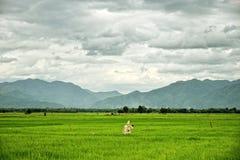 Reisfelder mit Vogelscheuche und Bergen: Thailand lizenzfreies stockbild