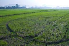 Reisfelder, neuen Anfang auf dem Gebiet pflanzend Stockbild