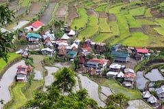 Reisfelder in Philippinen Stockbild