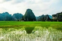 Reisfelder, Tam Coc, Ninh Binh, Vietnam gestaltet landschaftlich lizenzfreie stockfotografie