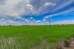 Reisfelder und blauer Himmel mit Stockfotos