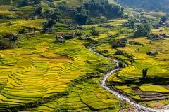 Reisfelder und ein Fluss stockfoto