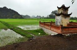 Reisfelder und Kalksteinfelsen in Vietnam Stockfotografie