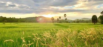 Reisfelder und ländlicher Lebensstil lizenzfreie stockfotografie