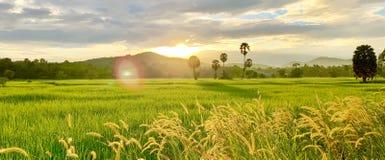 Reisfelder und ländlicher Lebensstil lizenzfreie stockbilder