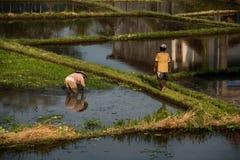 Reisfelder und -landwirte Ubud, Bali, Indonesien lizenzfreie stockfotos