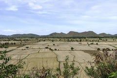 Reisfelder unfruchtbar und leer lizenzfreie stockfotografie