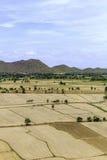 Reisfelder unfruchtbar und leer lizenzfreie stockfotos