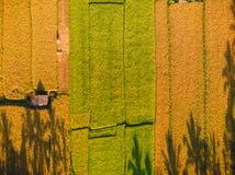 Reisfelder von Bali-Insel, Indonesien Vogelperspektive, Draufsicht stockbilder