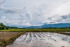 Reisfelder vorbereitet für wachsenden Reis Die einfache Lebensart von thailändischen Bauern mit Gebirgshintergrund unter blauem H lizenzfreies stockfoto
