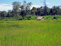 Reisfeldhütte, Kambodscha Lizenzfreie Stockfotos