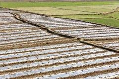 Reisfeldkante Stockbilder