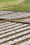 Reisfeldkante Stockfoto