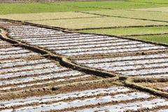 Reisfeldkante Stockbild