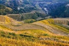 Reisfeldterrassen, Longsheng, Hunan, China Lizenzfreies Stockbild