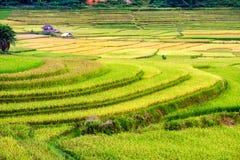 Reisfeldterrassen mit Häuschen im Tal an ländlichem Lizenzfreies Stockfoto