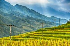 Reisfeldterrassen umgeben durch eine großartige Querstation stockfotos