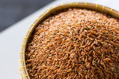 Reiskorn Lizenzfreies Stockbild